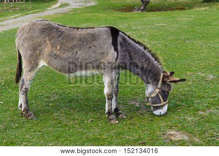 Donkey - plain unassuming and very stubborn animals.