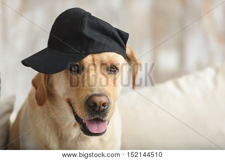 gangsta dog in a baseball cap sitting on a couch with copy space