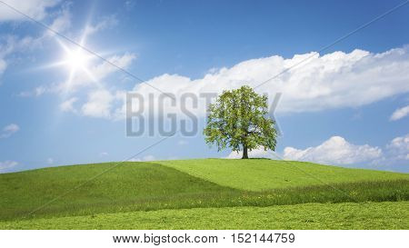 An image of a lonely tree on a hill in spring time