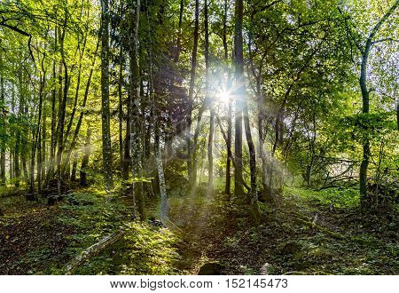 Sunrise In The Wilderness Of A Valley In The Forest