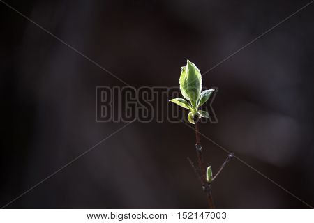 green leaf in spring with black background