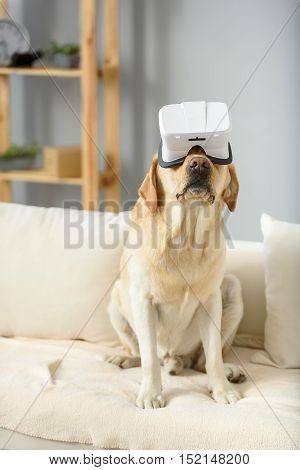 pet wearing virtual reality headset and sitting on a sofa indoors