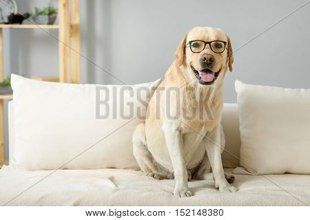 funny dog sitting on a bed in glasses, exams and study concept