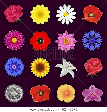 Set of red rose orchid lotus cornflower tulip poppy white lily chamomile chrysanthemum sunflower dahlia dandelion. Spring and summer flowers isolated. Floral design elements vector icons.