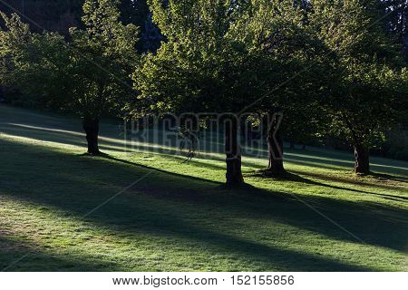 Forest green grass and sunlight for background