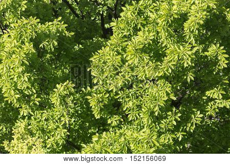 tree top view green leaves nature background