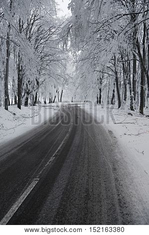 Mountain road in snowy forest