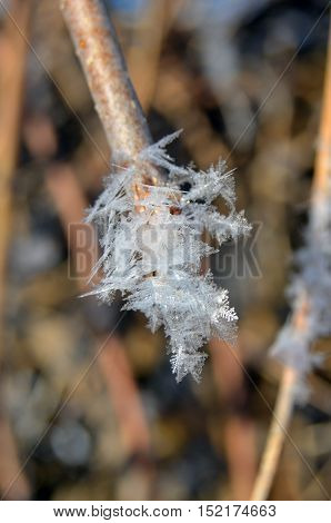 Close up of hoar frost on twig