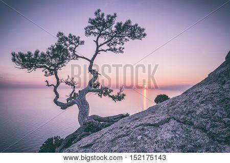 Tree on rock in Crimea, toned like Instagram filter