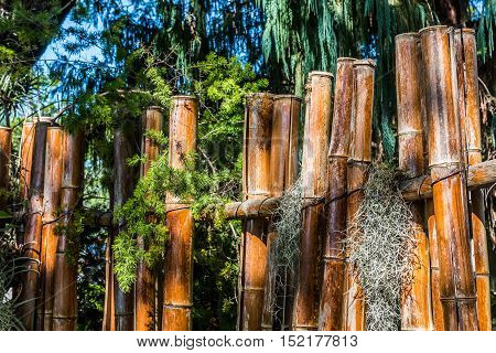 Bamboo fence with trees and Spanish moss.