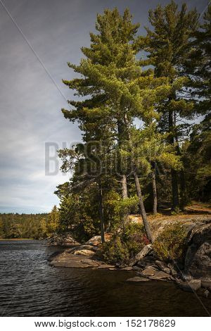 Tall pine trees on rocky lake shore with overcast cloudy sky in Algonquin Provincial Park, Canada