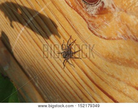 Spider sitting on a log. Closeup. Arthropods.