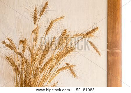Wheat as the decoration of the interior of a private house.