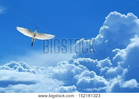 Peaceful Tropical bird over blue sky background concept of hope and peace