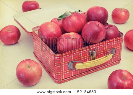 Packing a healthy lunch, vintage lunchbox full of apples, toned image