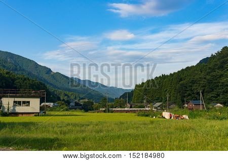 Japanese countryside. Rural landscape of Japan mountain village with farm houses and rice fields