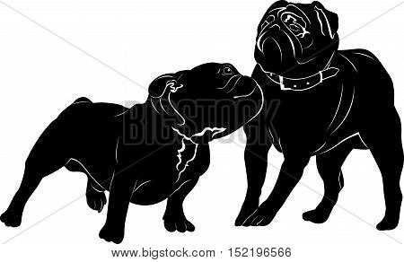 Bulldog breed dog. pug . Bulldog animal