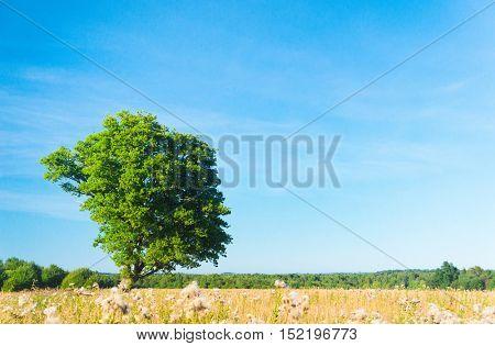 Scenic View Growth Season