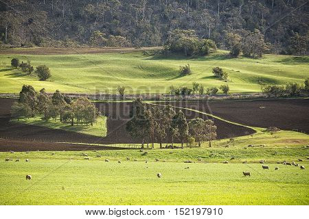 Rural Landscape Colebrook Tasmania