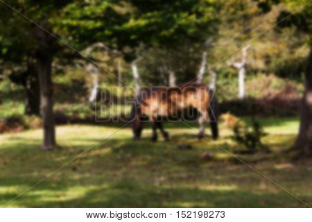 Ponies Roaming Free In The Woods During Autumn Out Of Focus.