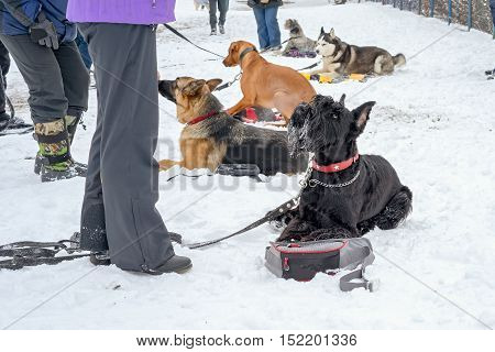 Service Dogs Work Out The Command