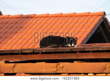 cute black cat sleeping on the roof of a shed in the evening light