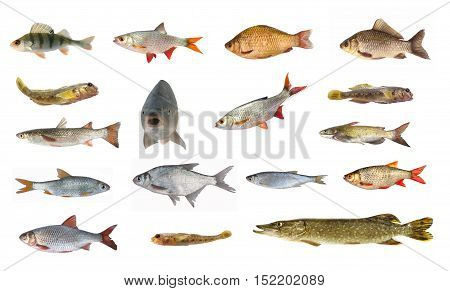 Species Of River Fish