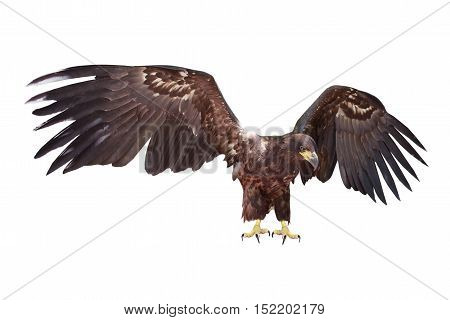 the a eagle a on white background
