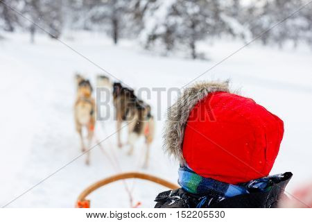 Husky dogs are pulling sledge with a kid at winter forest in Lapland Finland