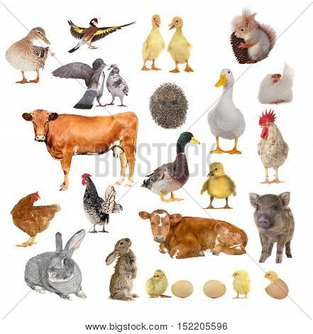 the farm animals on a white background