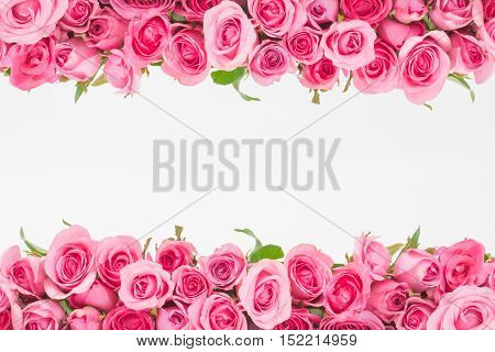 border of Beautiful fresh sweet pink rose isolated on white for love romantic valentine background