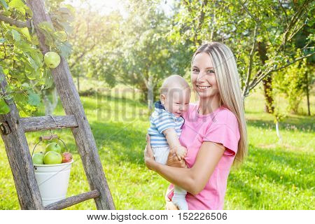 Young Mother With Baby Picking Apples From An Apple Tree