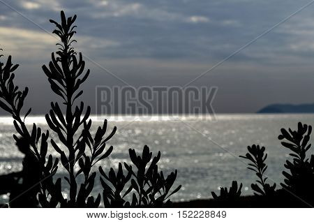 sea landscape with sun reflecting in the waves giving dreamy atmosphere