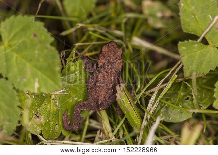 Little Frog In The Grass
