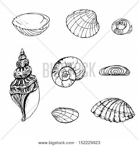 hand drawn pattern black and white set of shells. sketch