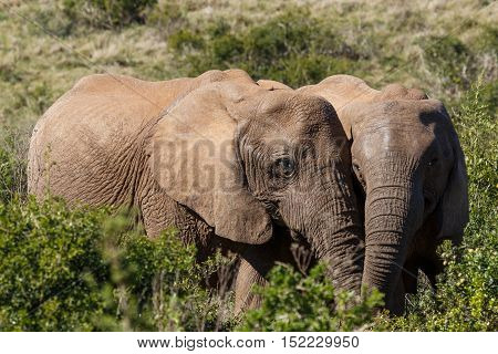 Love Is In The Air With These Two Elephants