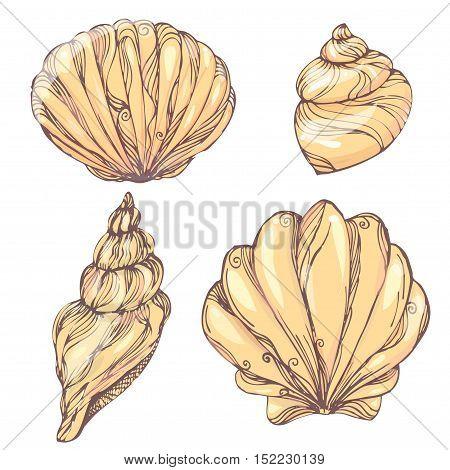 Vintage hand drawn pattern color doodle set of shells. sketch