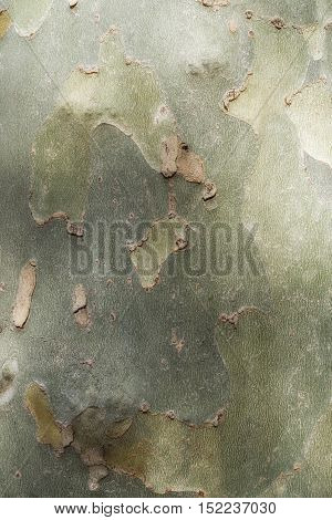 Dry trunk of a tree with abstract textures