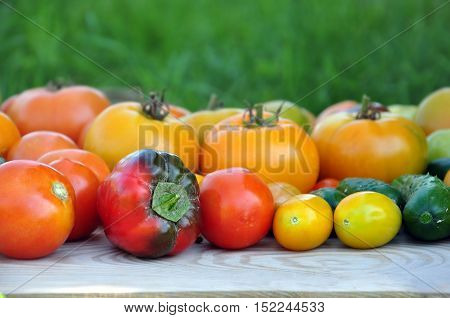 Crop of yellow and red tomatoes cucumbers sweet peppers on light wood surface. Side view selective focus.