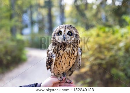 Owl sitting on a hand in the street