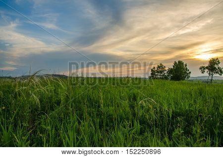 Summer crimson sunset. sky crimson. maroon clouds on sunset. green carpet at sunset.