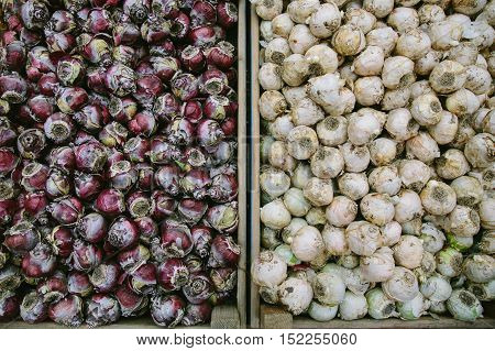 Flower bulbs in box at a flower market top view