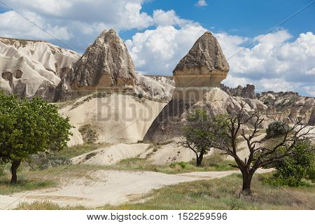 Rock formations and trees in White valley landscape Turkey