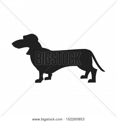 Vintage vector image of a black silhouette of a thoroughbred Dachshund dog standing straight isolated on white background looking like a shadow of the image.