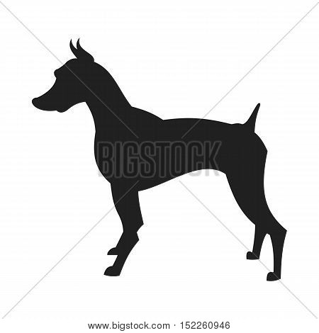 Vintage vector image of a black silhouette of a thoroughbred black male Doberman Dog standing straight isolated on white background looking like a shadow of the image.