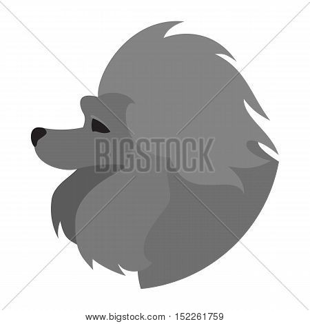 Pedigree dog head poodle. Purebred pet animal isolated on white background