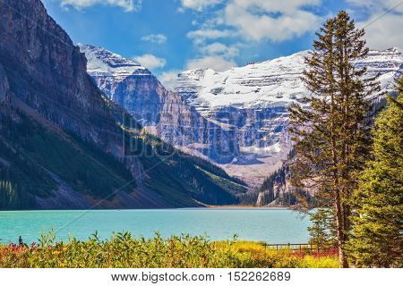 Banff National Park, Rocky Mountains, Canada. Flowers on the bank of glacial Lake Louise. The emerald water of the lake surrounded by mountains, glaciers and pine forests