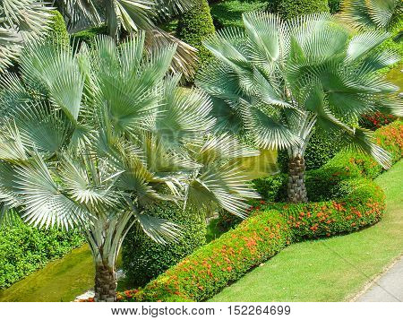 Thailand little tropical trees with openwork twisted leaves under the bright sun