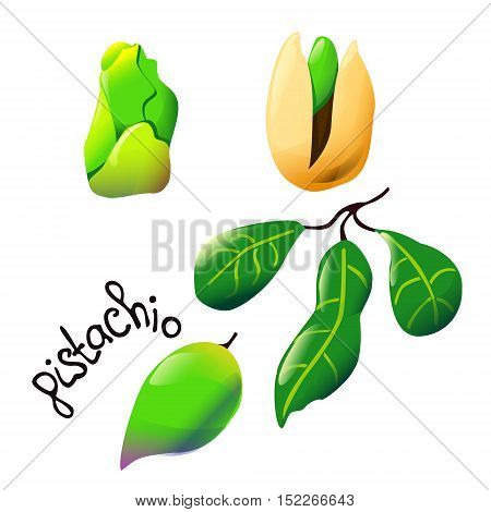 Vector botanical illustration with an isolated pistachio but shell and leaf. Perfect cartoon design for coocing oil label logo ice cream cover recipe biology book or poster