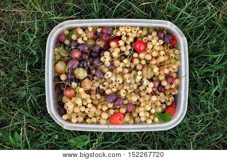 Fresh berries: white currant raspberry gooseberry cherry in a rectangular plastic container on grass. Top view close up.